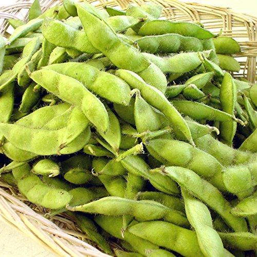 【お中元・夏ギフト】新潟産 朝採り 枝豆 2kg/大き目な粒が嬉しい美味しいえだ豆