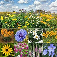 All Perennial Wildflower Heirloom Seed Mix | 1/4 lb Bulk Variety Fast Sprouting 500 SF Coverage
