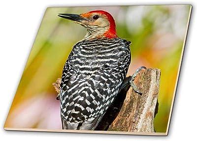 Fort Myers 8-Inch 3dRose ct/_83697/_3 Florida Burrowing Owl Pair-Na02 Cad0034-Claudia Adams-Ceramic Tile