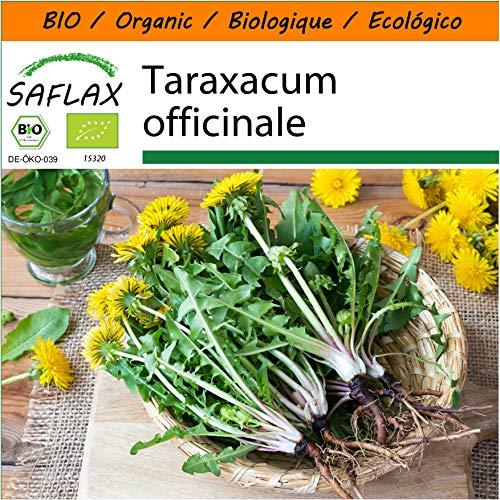 SAFLAX - BIO - Pissenlit - 400 graines - Taraxacum officinale