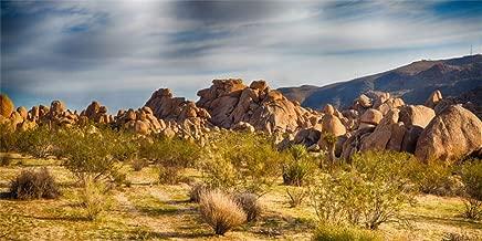 AOFOTO 6x3ft National Park Joshua Tree Background for Photography American Southwestern Barren Sandstone Landscape Backdrop Natural Beauty Arid Desert Yucca Boulder Photo Studio Props Vinyl