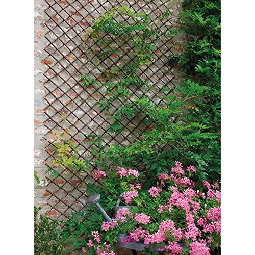 Weide Willow 170262 Treillage