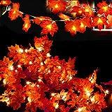 Evance 2 Pack Guirnaldas Luminosas Hoja de Arce Artificial, 10FT 20 LED Cadena de Luces a Pilas, Guirnalda de Otoño Lámparas Decoradas Iluminación de Acción de Gracias Halloween Navidad (20FT/40LED)