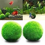 guoyihua Marimo Moos Bälle–Die ästhetisch Schöne schaffen Gesunde Umwelt–Umweltfreundlich, pflegeleicht bordkanten Algen Wachstum–Garnelen Schnecken lieben Sie