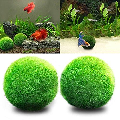 angju Moos Bälle – Mooskugel, Biofilter für Aquarien, umweltfreundlich Fisch Tank ornament Aquarium Deko Pflanzen Wasserpflanzen Aqua Plant
