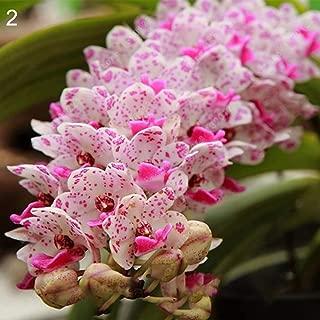 Flower Seeds, Plant Seeds, yanQxIzbiu 100Pcs Fragrant Orchid Seeds Cymbidium Flower Home Office Garden Bonsai Plant - 2# Orchid Seeds