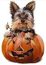 ZEROYOYO Halloween Pumpkin Garden Flag Yard Banner House Decor Halloween Decor