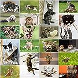 Divertidos gatos: juego de 20 tarjetas postales con divertidos gatos, dulces, malvados y divertidos (20 diseños diferentes) para coleccionistas y postcrossing de Edition Colibri.