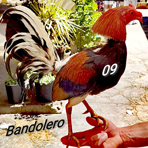Bandolero09