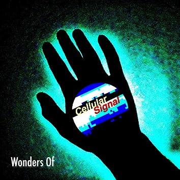 Wonders Of