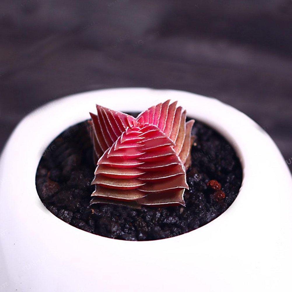 FOReverweihuajz - 100 semillas de árbol de Buda, color rojo y ...