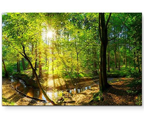 Paul Sinus Art Leinwandbilder | Bilder Leinwand 120x80cm Wald im Sonnenschein