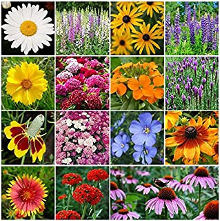 All Perennial Wildflower Seed Mix - 1 Pound, Mixed