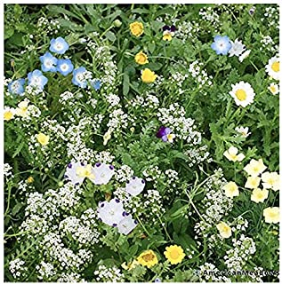 One Ounce: Lawn Replacement - Low Growing Flowers and Plants with Annuals and Perennials