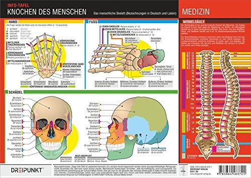 Knochen des Menschen: Die Knochen des menschlichen Skeletts mit deutscher und lateinischer Bezeichnung.