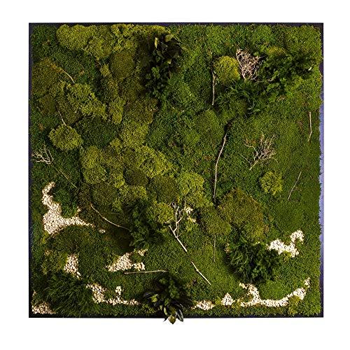 Moos-Wandbild 3D Moosbild - Plateau mit versch. Moosen - 200 x 200 cm - Pflanzen & Moos Komposition - auf Holzfaserplatte anthrazit