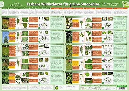 Essbare Wildkräuter für Grüne Smoothies Teil 1 - Wandposter (DINA2) - (2020): Schnell eindeutig erkennen, selber sammeln und mit gutem Gefühl genießen ... selber sammeln und mit gutem Gefühl genießen)