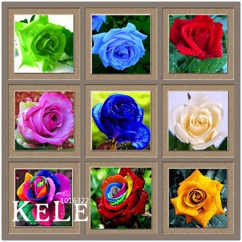 Perte de promotion! Pots de fleurs jardinières, 20 sortes de 50 graines, Rainbow Rose semences Belle rose semences Bonsai plantes Graines, # S69N7C