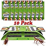 Dekugaa Cockroach Traps with Bait, 10 Pack Roach Motels,Sticky Traps,Glue Traps for Roach Bugs Spiders Crickets Beetles