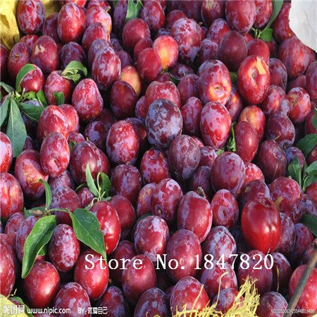 mélange de fruits Graines Bonsai pruniers Graines 20pcs Novel plantes pour jardin