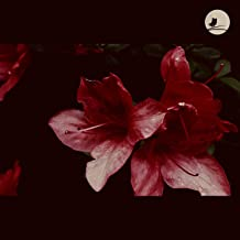 Azaleas in the Dark