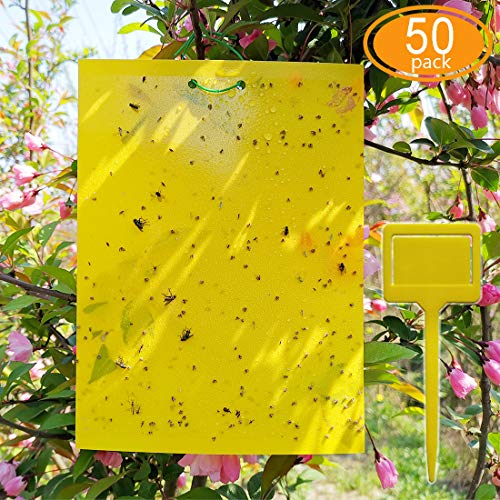 ALIGADO 50 Sheets Yellow Sticky Traps DualSided 8x6 Inch with Twist Ties and Plastic Holders for Capture Insects Like Gnats Flies Aphids