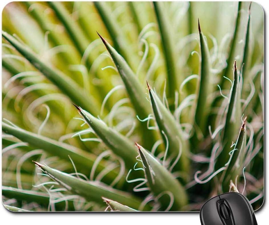Mouse Pad Overseas parallel import Outlet SALE regular item - Succulent Plant Gardening Flora Botanical Green 1