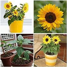 50pcs Mini Dwarf Yellow Sunflower Flower Seeds Plant Garden Office Decor