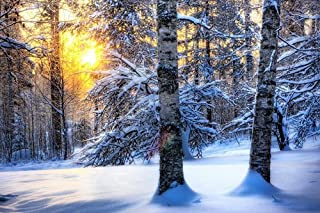 F.Mints Winter Forest Sunrise - Art Print Poster,Wall Decor,Home Decor(36x24inches)