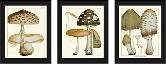 Mushroom Print Set of 3 Antique Botanical Beautiful Beige Brown Natural Colored Mushrooms Forest Nature Home Room Decor Wa...