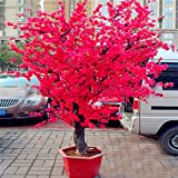Pinkdose 10 UNIDS Rojo Japonés flores de cerezo planta Patio Jardín Bonsai Ãrbol...