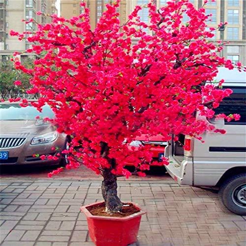 Pinkdose 10 UNIDS Rojo Japonés flores de cerezo planta Patio Jardín Bonsai Ãrbol Pequeño Sakura Ãrbol en maceta plantas para la plantación de jardín en casa