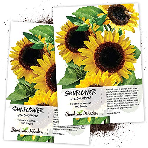Seed Needs, Yellow Pygmy Sunflower (Helianthus...