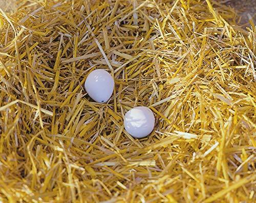Kerbl Nesteier aus Ton für Hühner (2 Eier pro Blister)