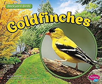 Goldfinches  Backyard Birds