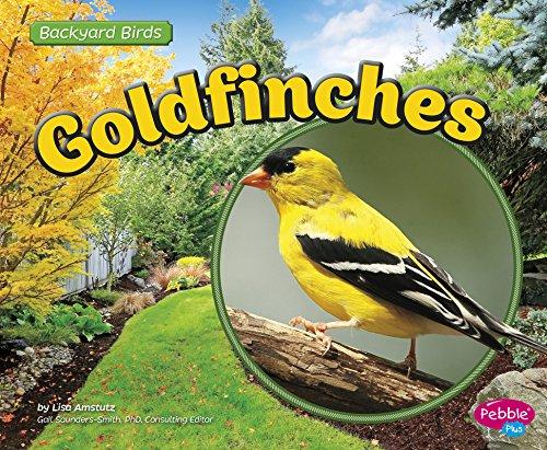 Goldfinches (Backyard Birds)