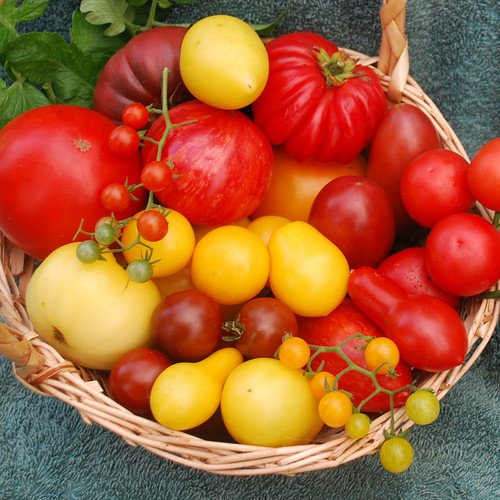 Plant World Seeds - Tombola (mixed Tomatoes) Seeds