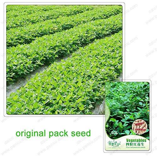 12 graines/Pack, Quatre graines d'arachides, les arachides, les arachides Quatre rouges, les graines de légumes balcon