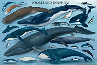 Whales and Dolphins Educational Ocean Animal Chart Poster - 24x36 Poster Print, 36x24
