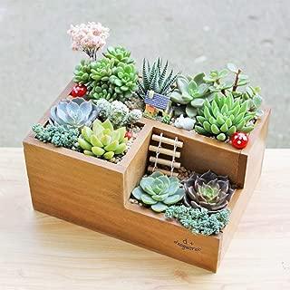 shamoluotuo 3-Grid Wooden Succulent Planter Pots Cube Planter Box Rectangle Modern Minimalist Flower Plant Containers Desk Organizer for Indoor Planter Planter Office Desk Window (Brown)