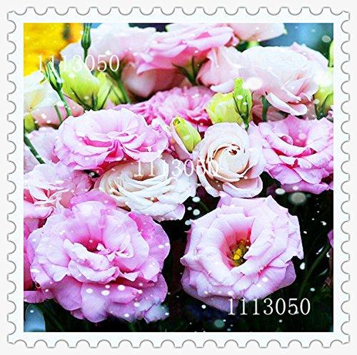 Promotion! Rainbow Rose Graines rares plantes Patio pot à fleurs Rose Graines Vivaces 100 PCS / Lot, # AK1LFN