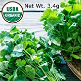 Gaea's Blessing Seeds - Cilantro Seeds 300 Organic Seeds Non-GMO 90% Germination Rate Leisure Coriander Heirloom Net Wt. 3.4+g