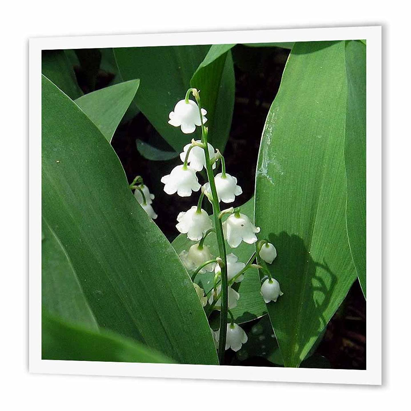 3dRose ht_158130_2 Lily of The Valley-Iron on Heat Transfer Paper for White Material, 6 by 6-Inch