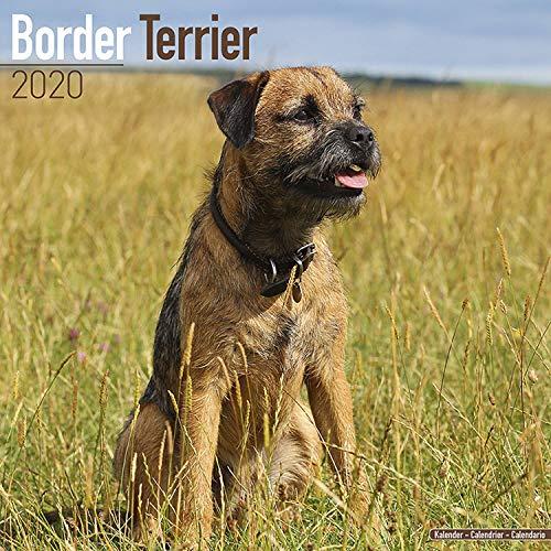 Border Terrier Calendar 2020