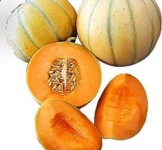 french cantaloupe charentais