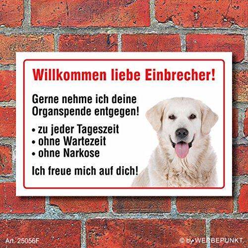 """Vorsicht """"Willkommen"""", Golden Retriever, Hund, Schild, Hinweis, 3 mm Alu-Verbund Motiv 1 300 x 200 mm"""