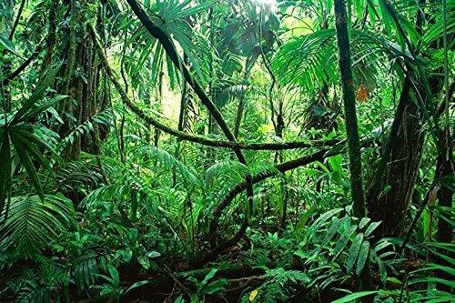 "BNS Reptile Habitat, Terrarium Background, DEEP in The Jungle - Various Sizes (21""x48"")"
