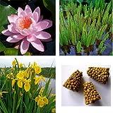 starter kit ninfea + 2 piante ossigenanti + 2 piante palustri + concime (ninfea rosa)