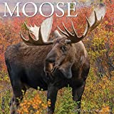 Moose 2021 Wall Calendar