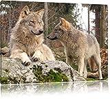 Pixxprint Wölfe im Wald, Format: 120x80 auf Leinwand, XXL